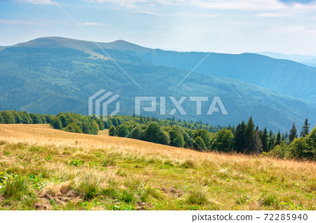 yellow grass on the meadow in mountains. beautiful nature landscape beneath a blue sky with fluffy clouds at high noon. 72285940