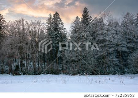 forest on a misty morning. trees in hoarfrost. beautiful winter scenery in foggy weather 72285955