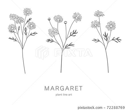 꽃의 일러스트 세트 마가렛 72288769