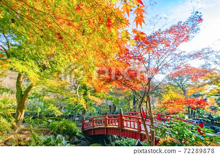 靜岡縣熱海市清晨熱海梅園的楓樹節 72289878