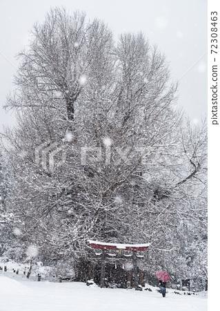 겨울 대목 나가노 현 이이 야마시 고베의 큰 은행 나무 72308463