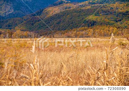 햇빛 국도 120 호를 따라 센 조가하라 단풍 경치 秋景色 72308890