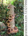 원목 표고 버섯 72327066