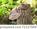 원목 표고 버섯 72327069