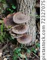 원목 표고 버섯 72327075