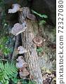 원목 표고 버섯 72327080