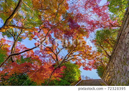 교토 야마자키 성천 경내 단풍 72328395
