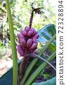 적자 바나나 열매 72328894