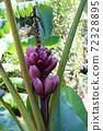 적자 바나나 열매 72328895