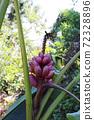 적자 바나나 열매 72328896