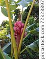 적자 바나나 열매 72328897