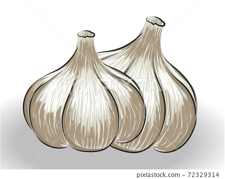 Composition of two realistically drawn garlic bulbs 72329314