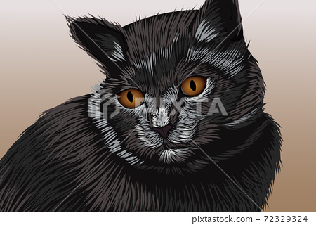 Black cat with brown eyes looking away. Realistic hand drawing 72329324