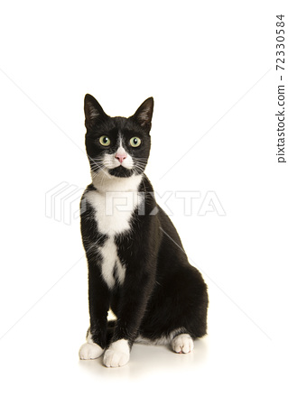 Black and white sitting european shorthair cat  isolated on a white background 72330584