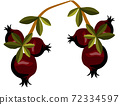 Composition of two branches of pomegranate tree with leaves and fruits on them 72334597