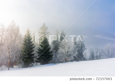 trees in mist on a snow covered hill. fairy tale winter mountain scenery. frosty weather on a sunny morning 72337063
