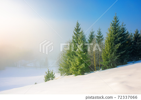trees in morning mist on a snow covered hill. beautiful winter landscape on a sunny weather 72337066