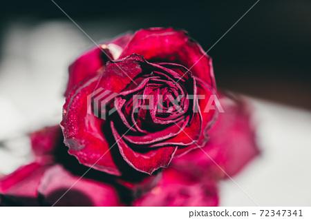 rose dryflower 72347341