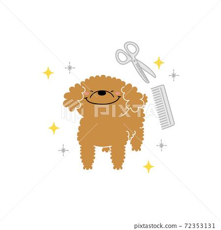 修剪貴賓犬 72353131
