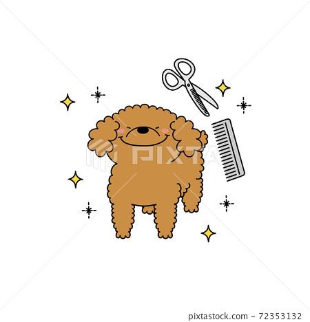 修剪貴賓犬 72353132