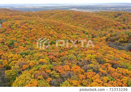 s路濕地天文台附近樹海的鳥瞰圖 72353286