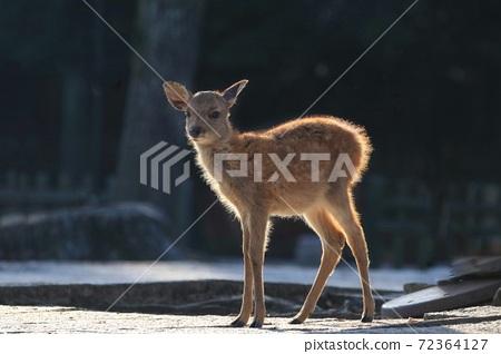 鹿 奈良 動物 72364127