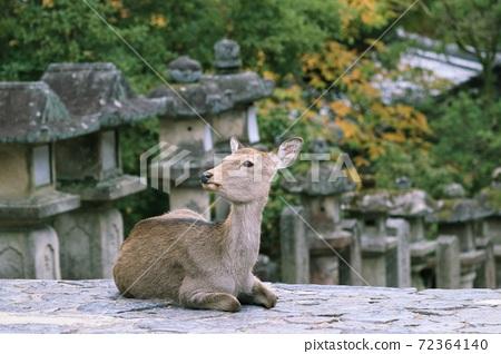 鹿 奈良 動物 72364140