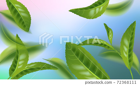 Realistic beautiful flying green tea leaf isolated on colorful background. Premium green tea for good health. Foliage nature plant for design, advertising, packaging products. Vector 72368111