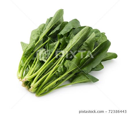 菠菜 72386443