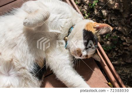 黏人的,貼心的,守衛,貓咪,喵喵,可愛,古錐,胖胖的,壯壯的,草地上,玩耍 72388030