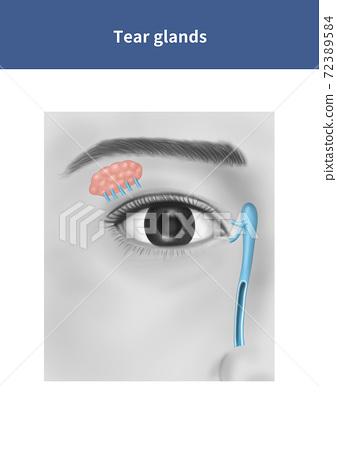 Lacrimal gland anatomy 72389584