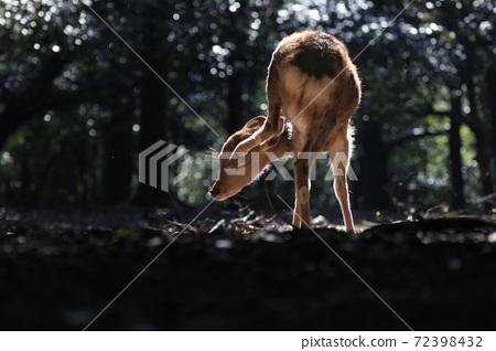 사슴 나라 공원 동물 72398432
