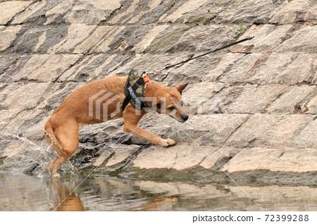動物 狗 72399288