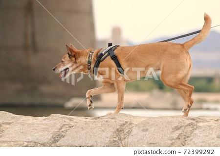 動物 狗 72399292
