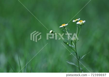 綠色植物 花朵 72399697