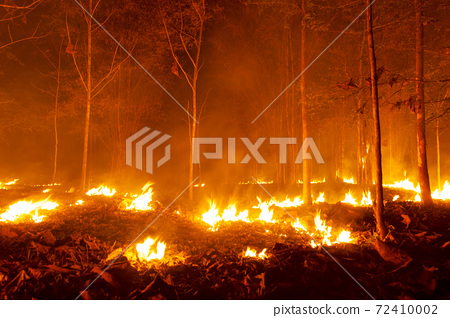 Forest fire, Wildfire. 72410002