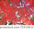 大秋天的樹葉Momiji國內旅遊形象 72414612