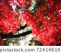 大秋天的樹葉Momiji國內旅遊形象 72414616