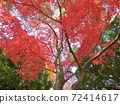 大秋天的樹葉Momiji國內旅遊形象 72414617