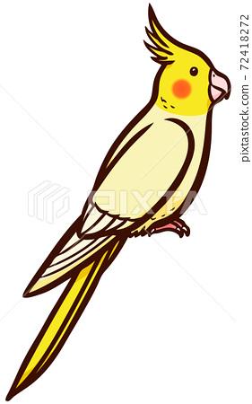 寵物鳥沖繩的插圖 72418272