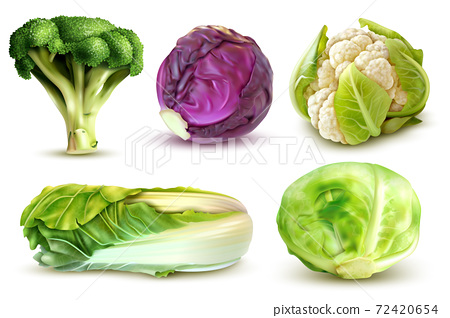 Cabbage Realistic Set 72420654