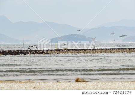 물떼새,유부도,충남 72421577