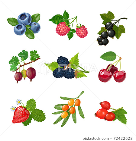 Berries Of Trees And Shrubs Set 72422628