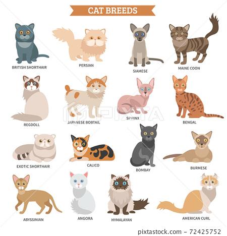 Cat breed set 72425752