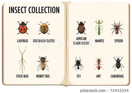 Set of insect collection in the book 72433334