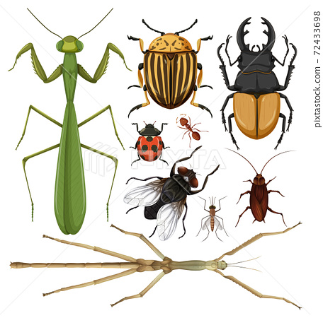 Set of different insects on white background 72433698