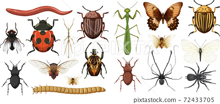 Different insects collection isolated on white background 72433705