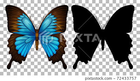 Butterfly and its silhouette on transparent background 72433757