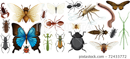 Different insects collection isolated on white background 72433772