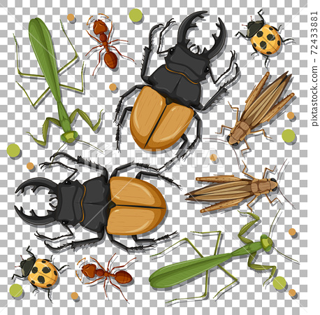 Set of different insects on transparent background 72433881